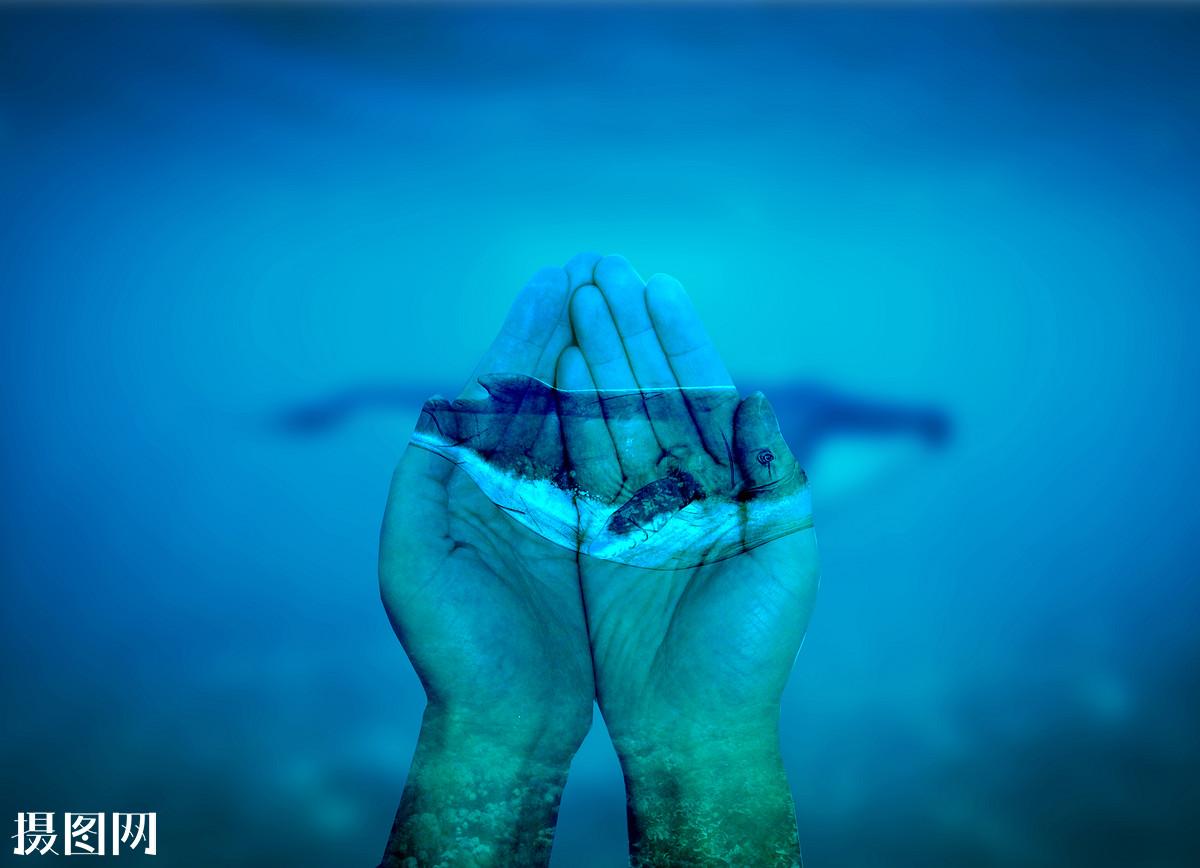 保护鲸鱼-双手捧鲸鱼图片图片