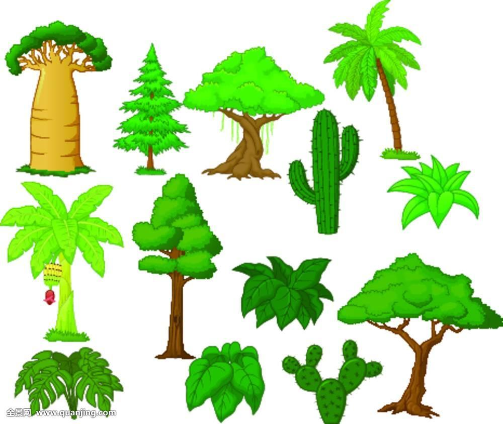 植物,环境,夏天,园艺,插画,木头,松树,灌木,刺槐,树林,收集,花园,生长图片
