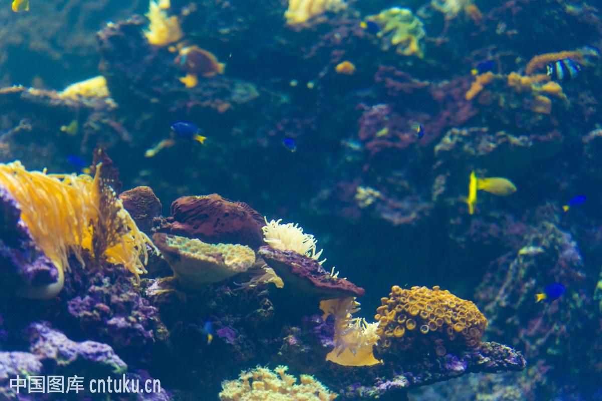 世界的图画/神奇的海底世界简笔画/海底世界的动物/鼓浪屿的海底世界
