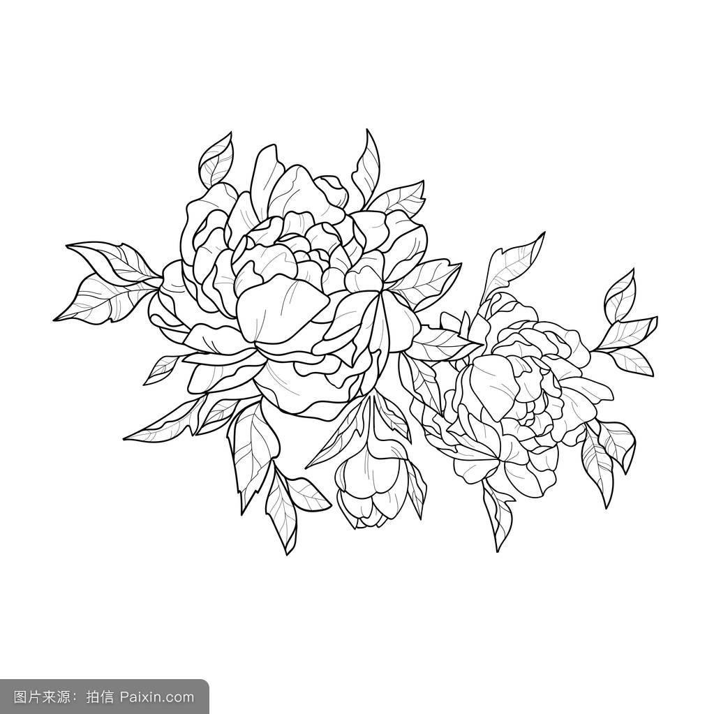 白色的背景,着色,图解的,花,纹身花,芽,分离,矢量插画,概述,黑白素描