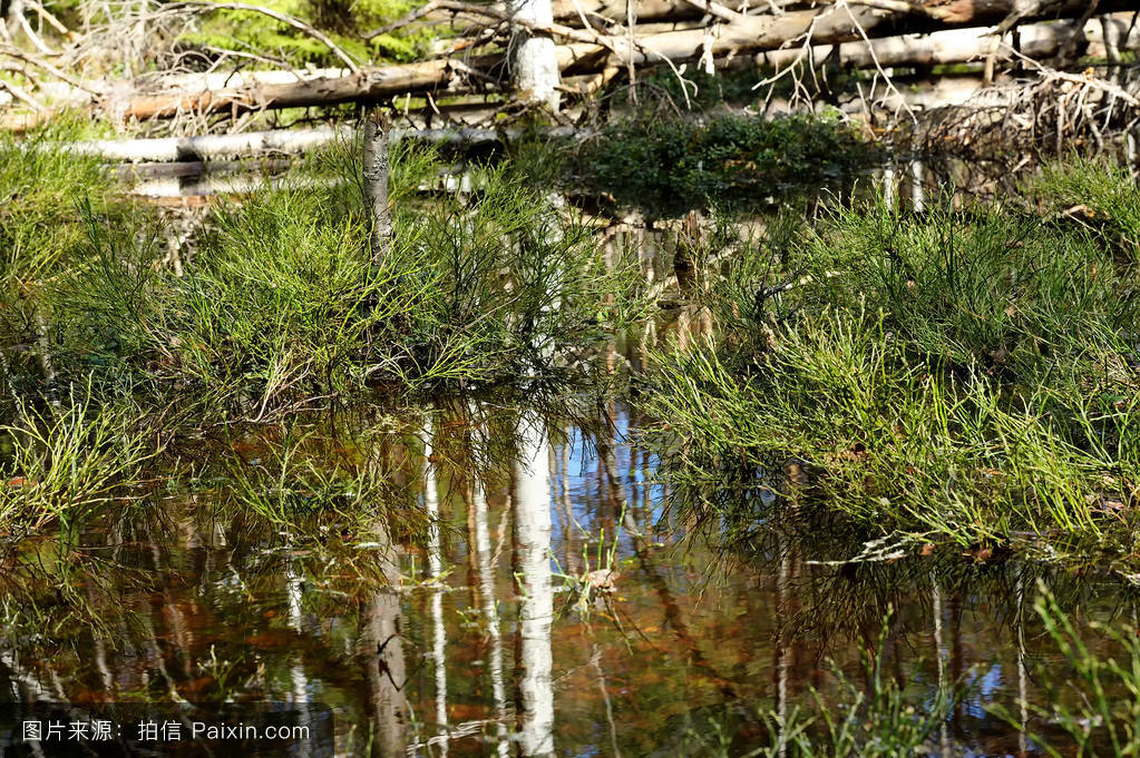 木材,景观,根,荒野,破损,极多,湿地,自然,杀了,丛林,春天,水,沼泽,森