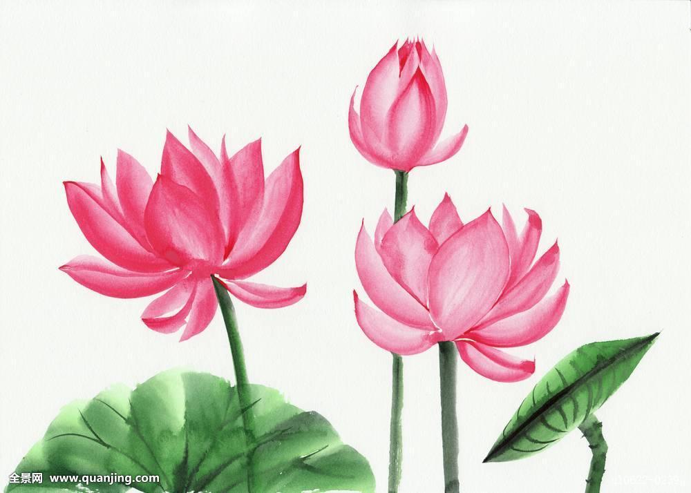 Lotus White Painting