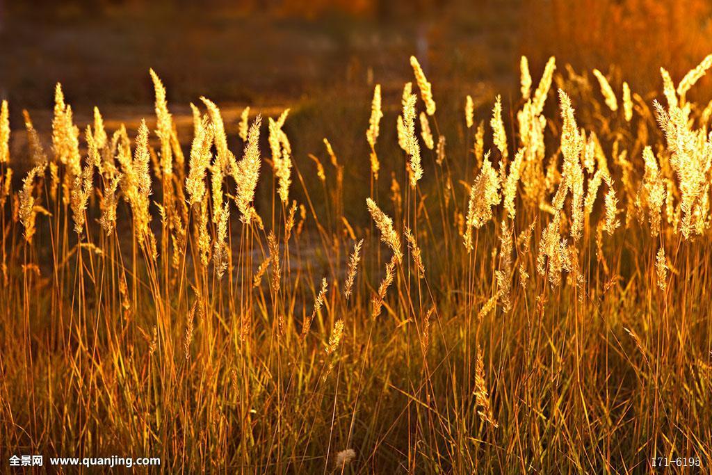 无人,白天,户外,内蒙古,额济纳旗,胡杨林,胡杨树,秋天,金色阳光,逆光