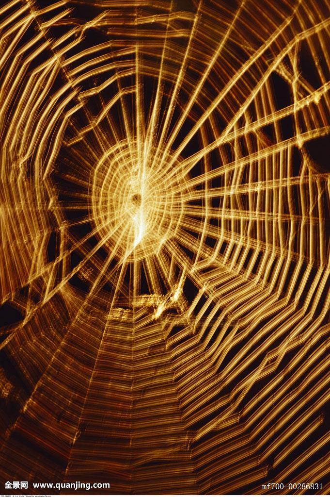 网_蜘蛛网