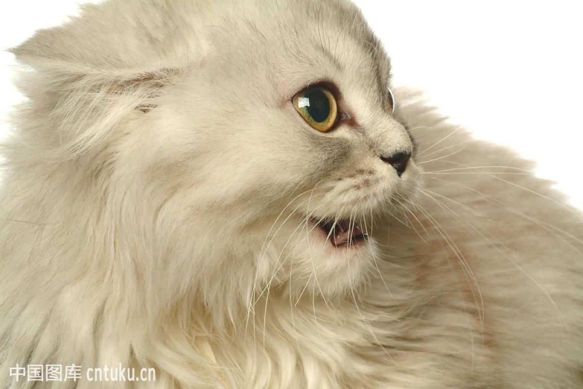 宠物 惊讶的表情分享展示图片