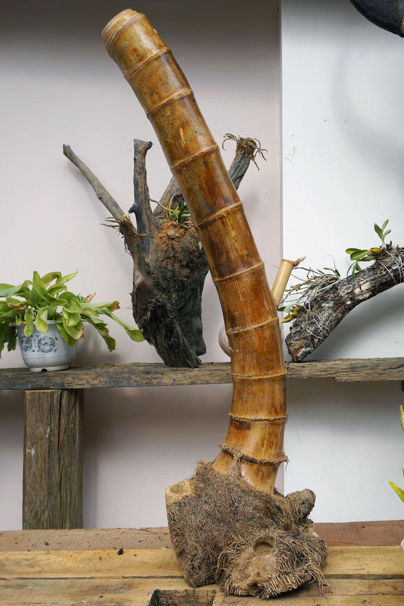 少数民族盆栽,傣族盆景,家庭装饰,石斛盆栽,竹根雕塑,竹根工艺品,竹图片
