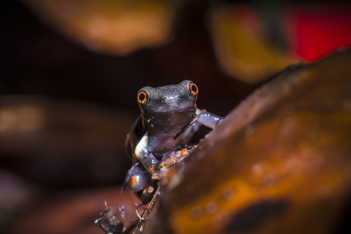 青蛙冬眠的时候心脏是否跳动