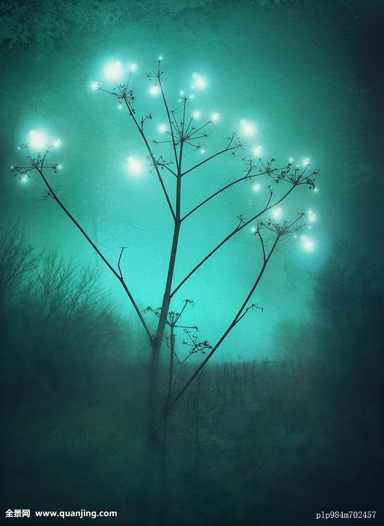 仙女萤火虫树林魅力发光魔法雾气神秘夜晚植物球体奇怪