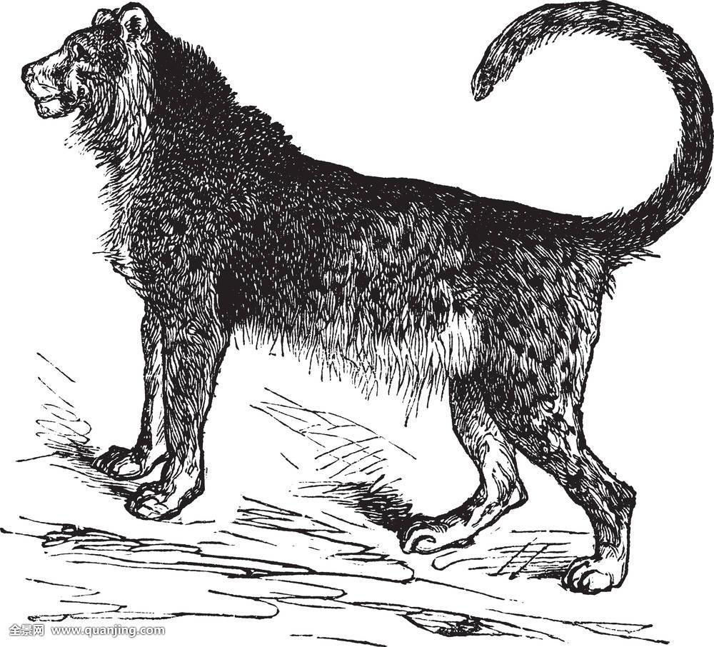猎豹,旧式,雕刻图片