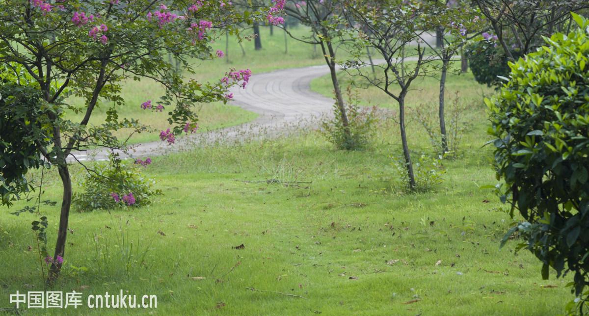 lawn,草,公园,户外,浪漫,绿色,树木,秋季,couple