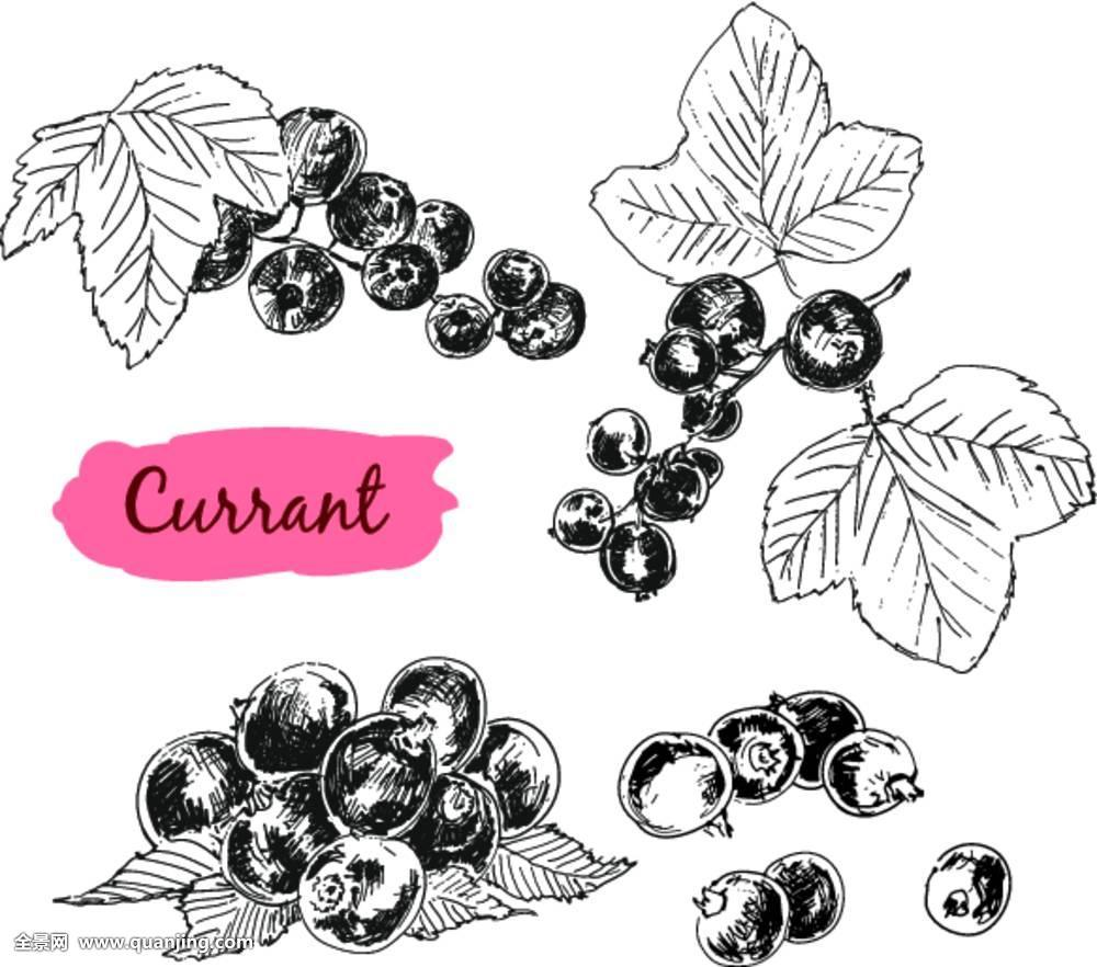 浆果水果健康物体甜多汁抗氧化黑色成分叶子医疗混合
