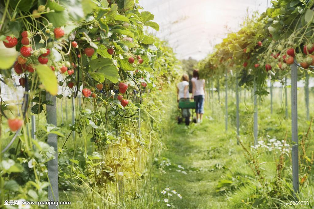人,走,菜园,温室图片