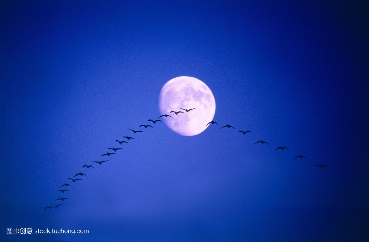 蓝色月光侦探礹.+y��_动,月光,搬家,月亮,乔迁,概念,小鸟,夜晚,移,搬动,户外,天空,蓝色,几