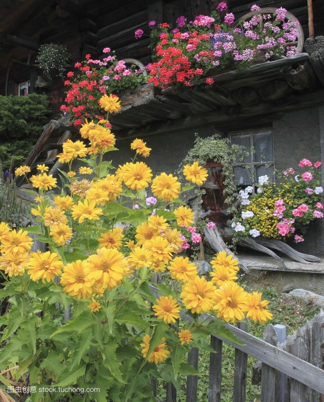 花卉,瑞士,阳台,住房,小屋,旅行,欧洲,户外,植被,伯尔尼高原,蒂博尔图片