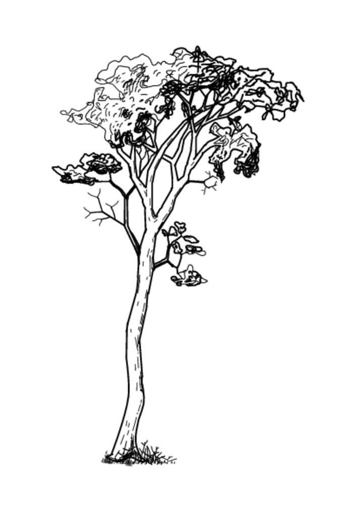 叶子,季节,夏天,天气,木头,木刻,标识,线条艺术,电脑制图,图像,黑白图片
