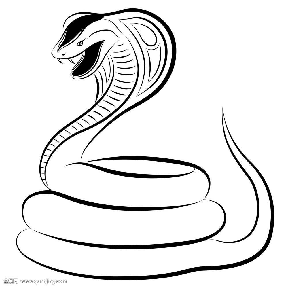 蛇,眼镜蛇图片