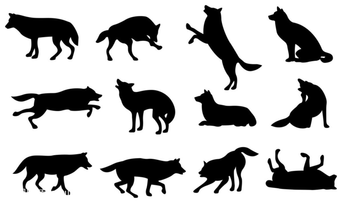 充满,丛林狼,动物,狗,黑色,狼,猎犬,猎人,轮廓,犬科,矢量图,艺术,装饰图片