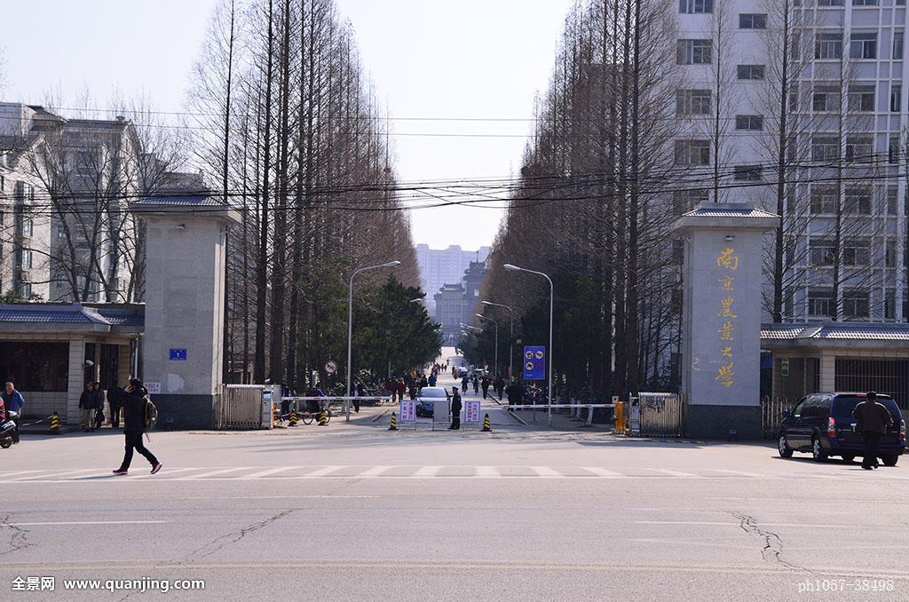 江苏,南京,玄武区,卫岗,南京农业大学图片
