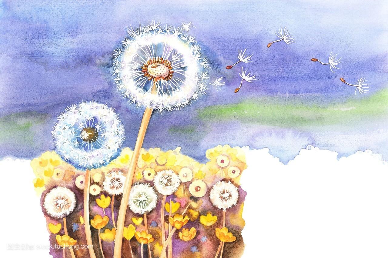 横图,水彩画,彩色,花,无人,植物,创意,插画和绘画,毛茸茸,花冠,蒲公英