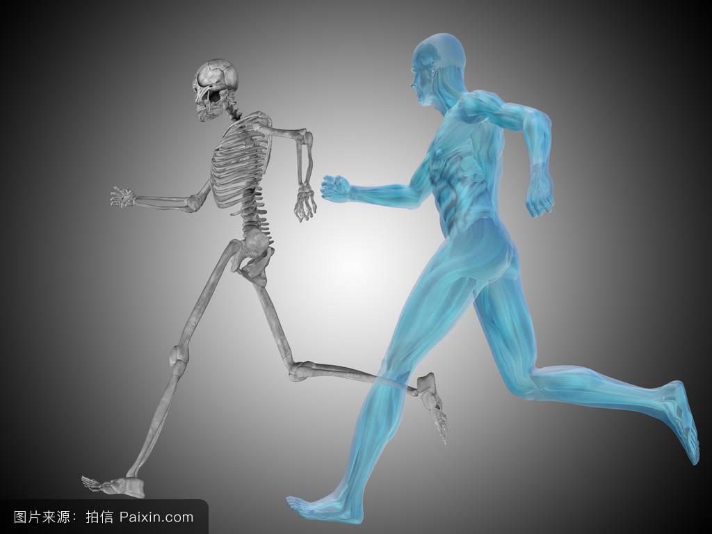 日本人体裸体阴�_人体解剖学图解