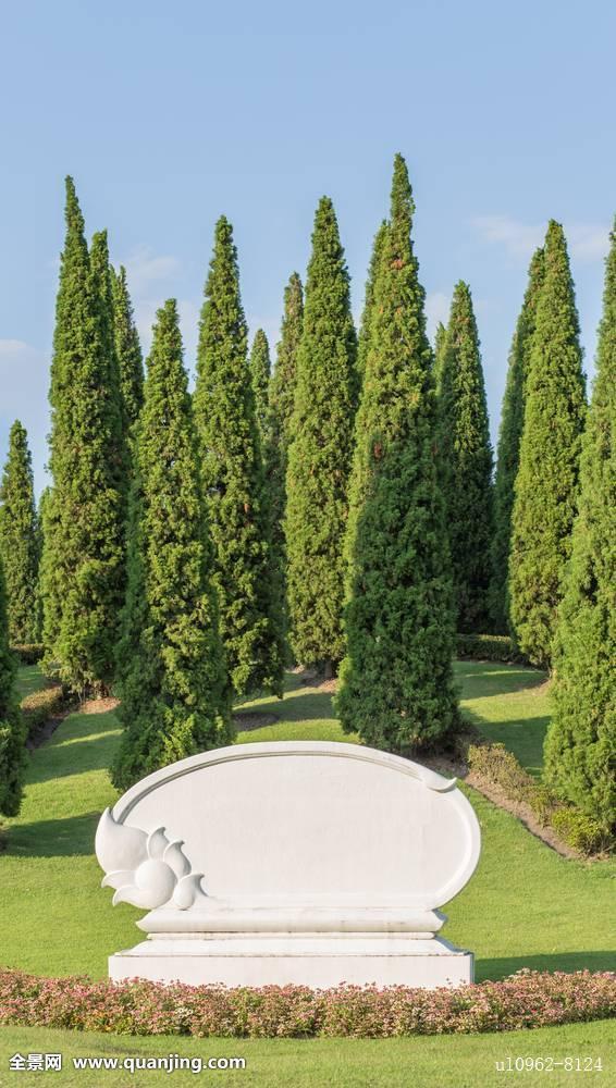 树林,草,夏天,背景,草坪,自然,花园,绿色,办公室,空,旗帜,盘子,广告牌图片