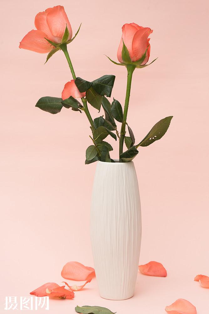 情人节,花瓶,玫瑰,静物,七夕,爱情,粉色,花瓣,爱,喜爱,七夕节,浪漫图片