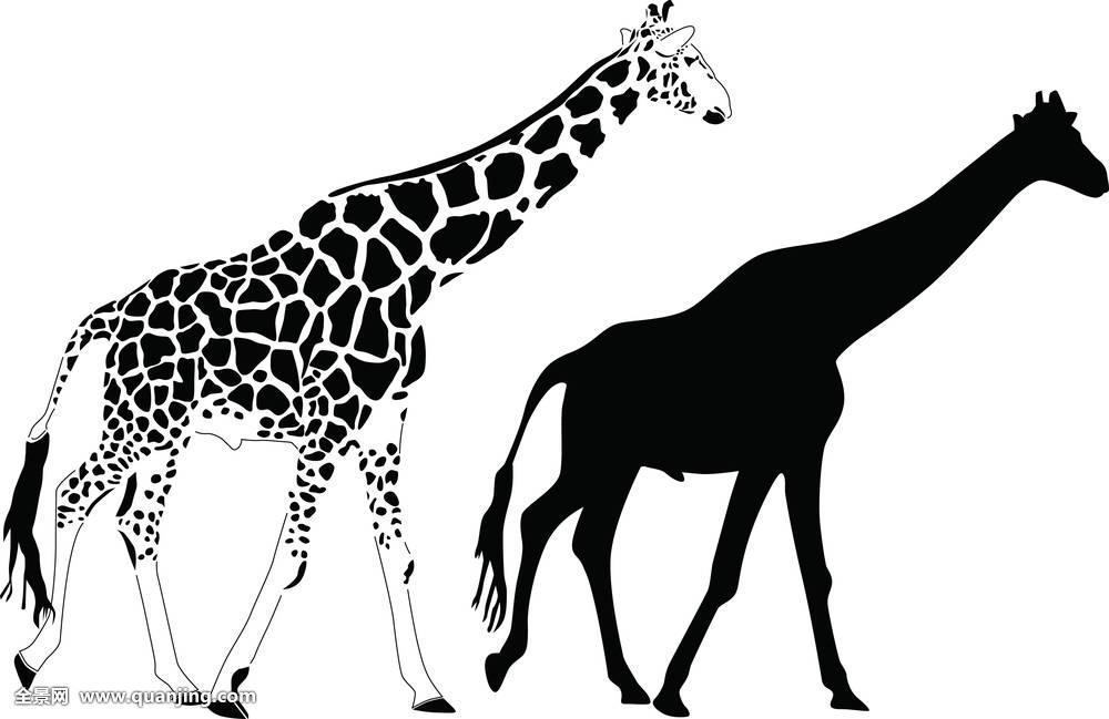 长颈鹿,剪影,矢量图片
