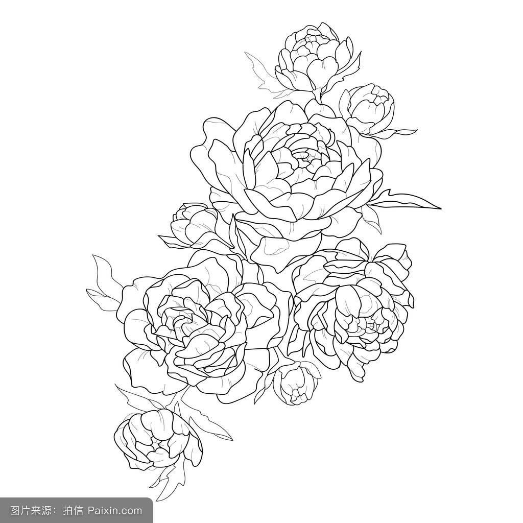 开花,形象,牡丹,三,花的,艺术,设计,黑色和白色,矢量,书,纹身牡丹图片