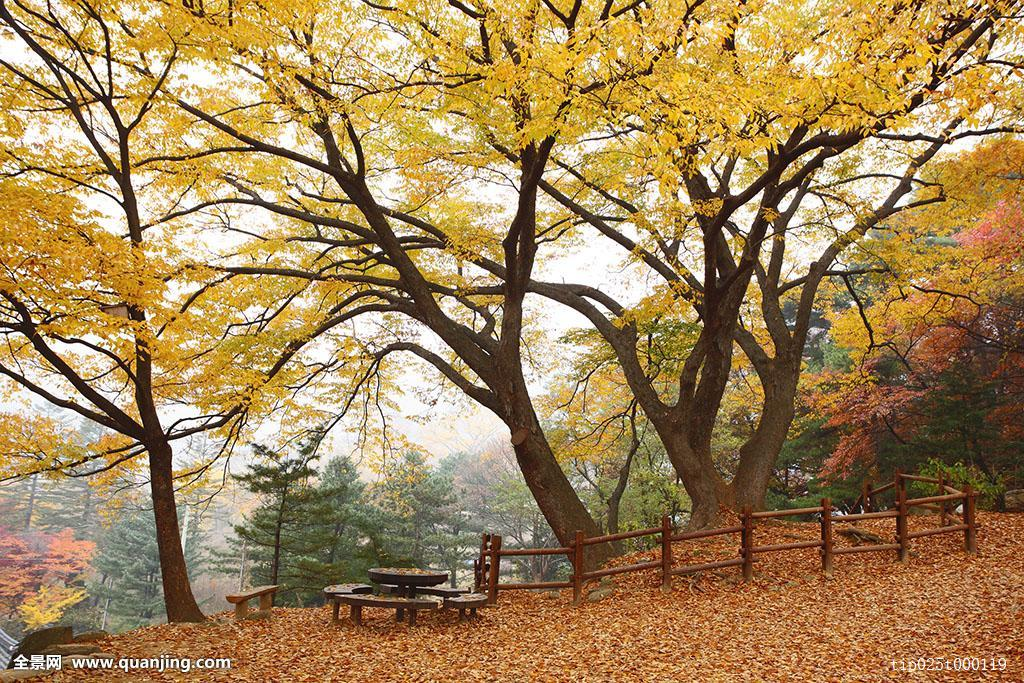 义马市招聘�y�k��d_秋天,季节,树,南汉山城,白天,黄色,秋色,枫树,无人,彩色,植物,户外