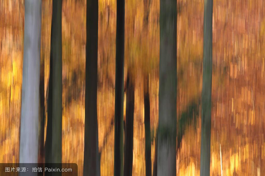 alleroed,森林,平静的,白天,变模糊,黄色的,绿色,skov,秋天,颜色,画报图片