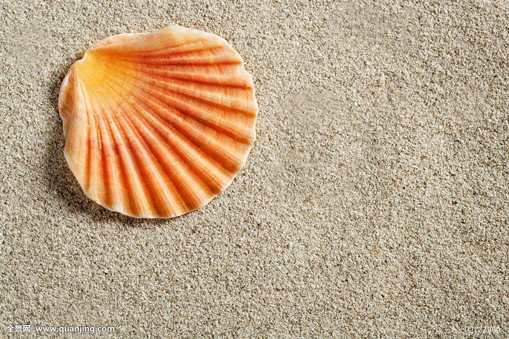 漂亮的贝壳图片-贝壳的工艺品-观音贝壳图片大全-扇贝壳手工制作图片图片