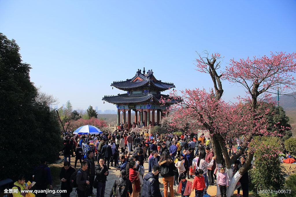 一群人户外南京梅花山梅花山树林花海美景春季人群