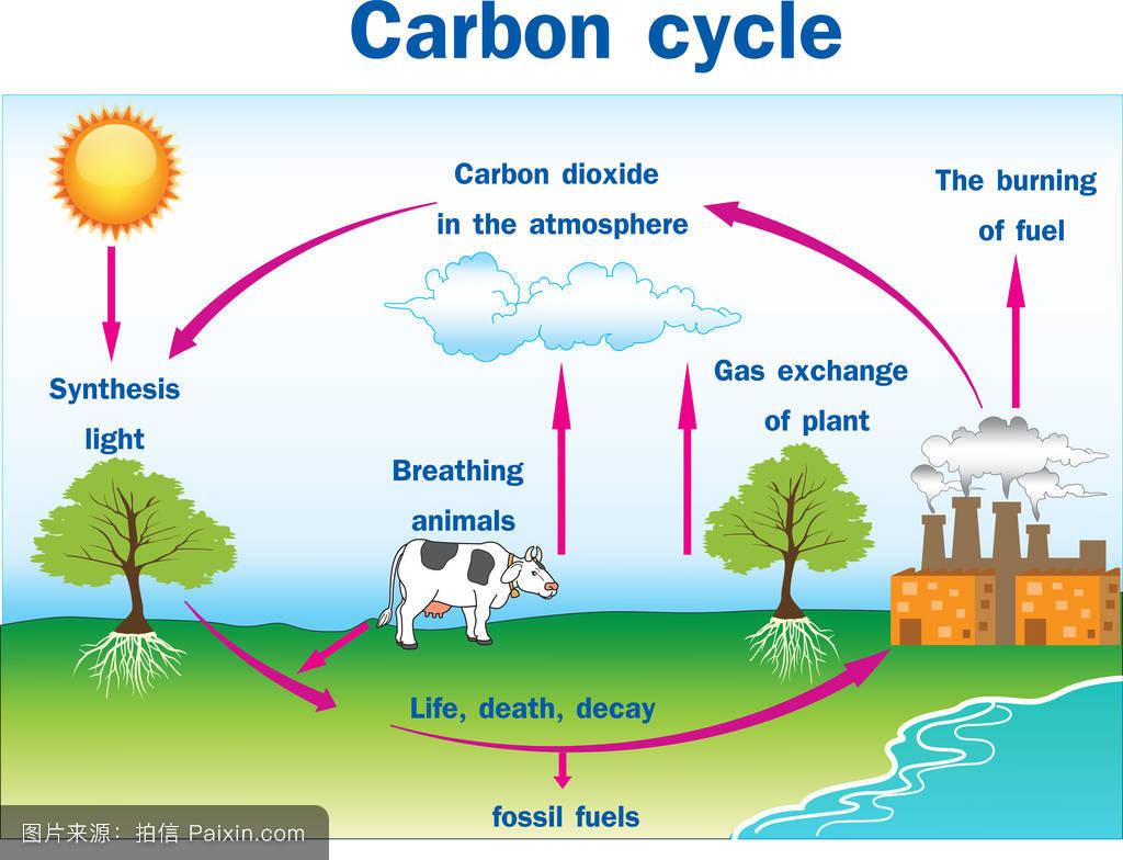 作用_碳循环矢量