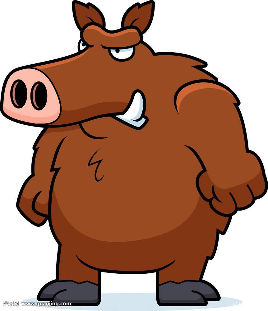 公猪,愤怒,疣猪,生气,野生,猪,卡通,动物,插画,皱眉,烦乱,站立图片