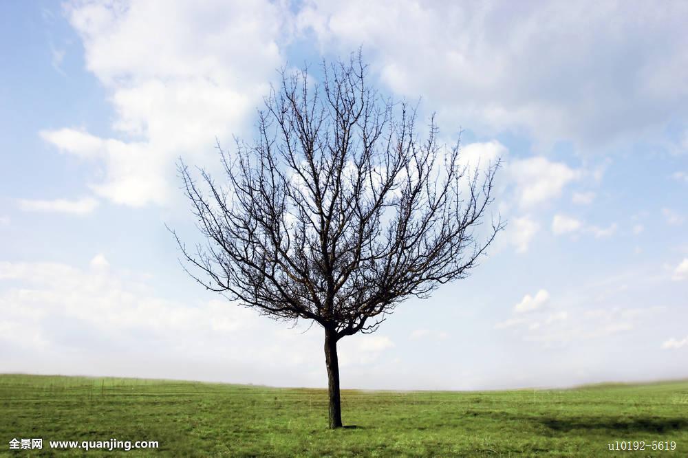 义马市招聘�y�k��d_一个,树,草