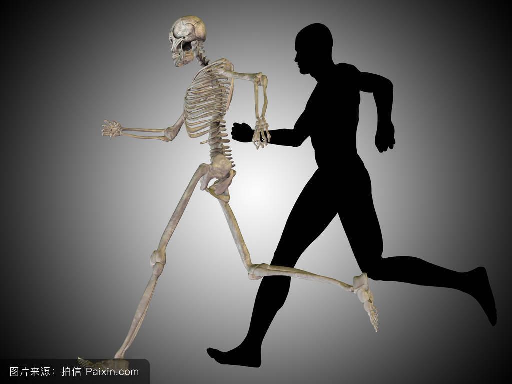 日本人体裸体阴�_人体解剖模型