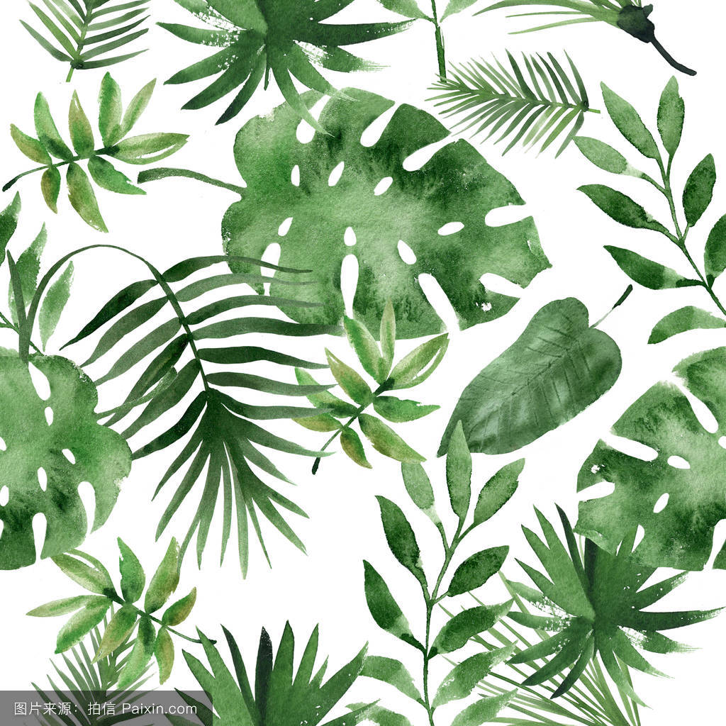 异国情调的,花园,轮廓,植物,水彩画,设计,热带的,夏季,艺术,剪贴画图片