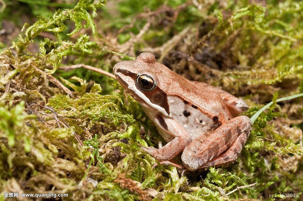 青蛙是怎样冬眠的小学作文