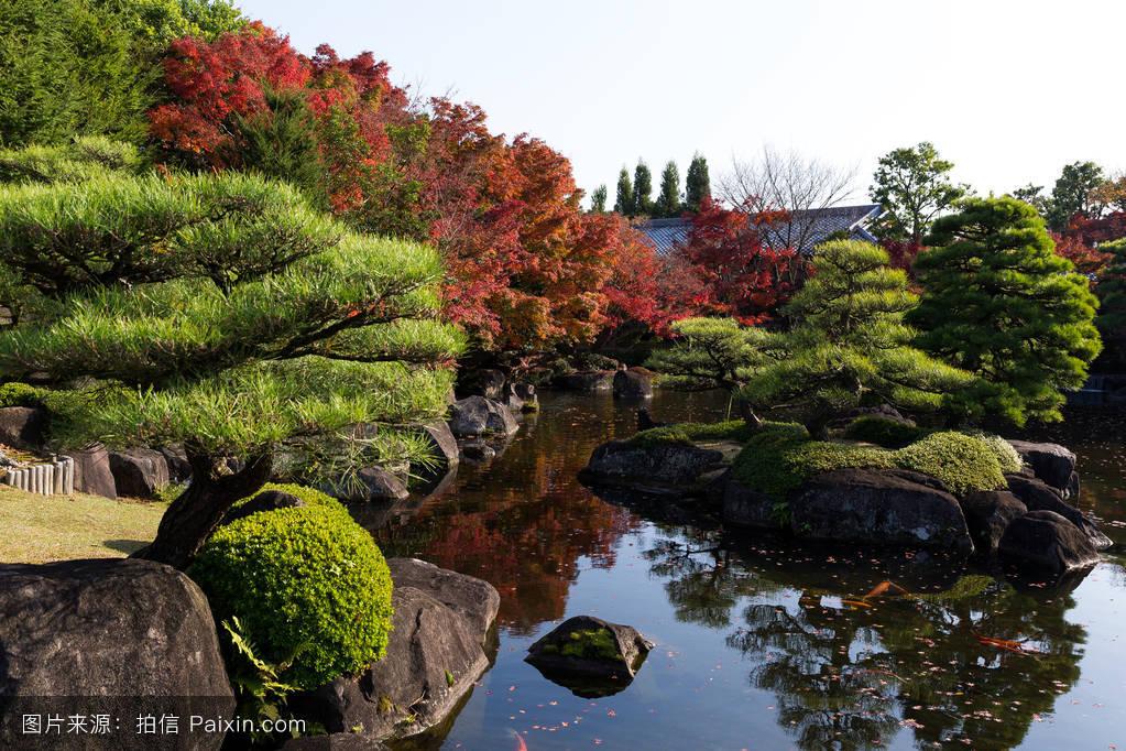 japanesegardenwithredmaplefoliage