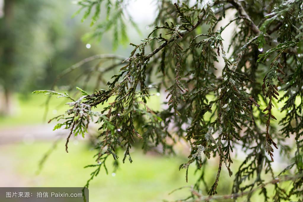 热带植物背景,巴厘岛,印度尼西亚.