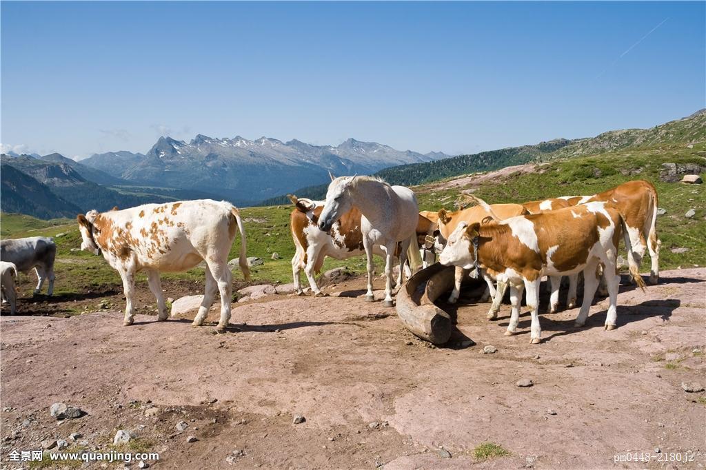 马,动物,母牛,农场,牛,草场,山,蓝色,美女,漂亮,喝,围兜,彩色,褐色图片