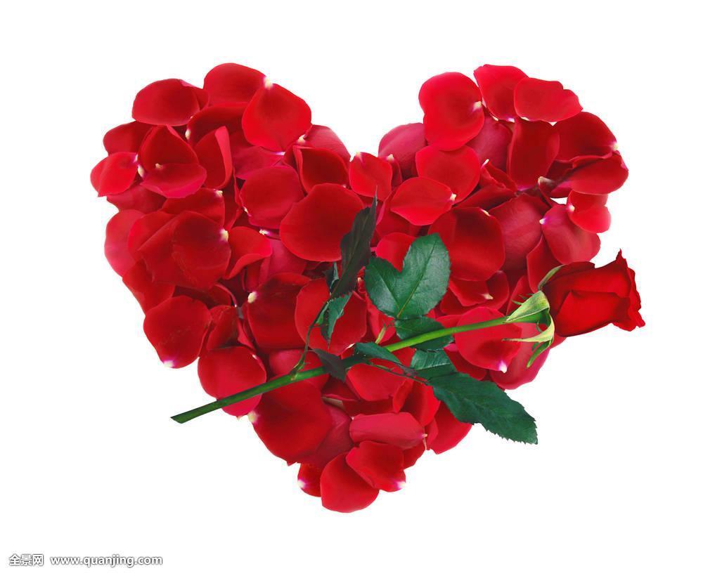 漂亮,心形,红玫瑰,花瓣,玫瑰花,隔绝,白色背景图片