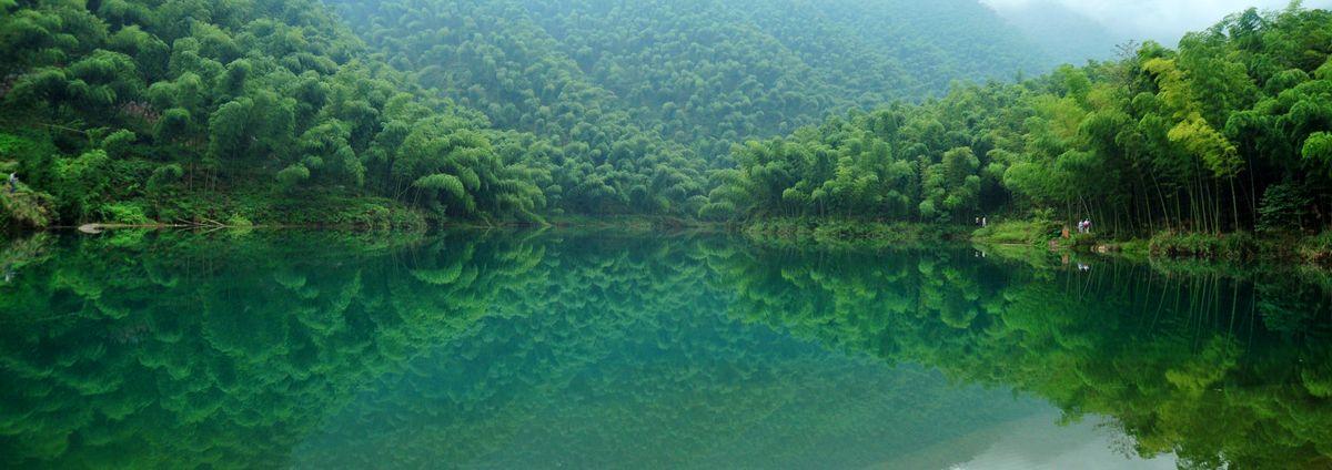 山水竹林风景壁纸,山水,壁纸,竹林,楠竹,竹子,竹海,宜宾,青竹,毛竹