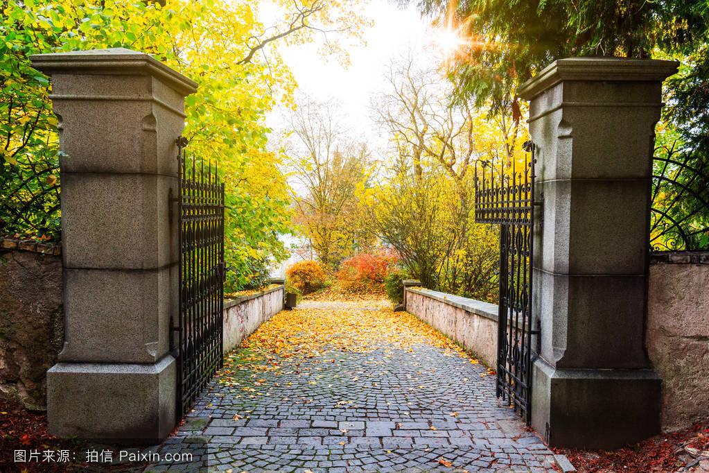 铺,阳光,胡同,美丽的,黄色的,自然,秋天,户外的,九月,外部,景观,安宁图片