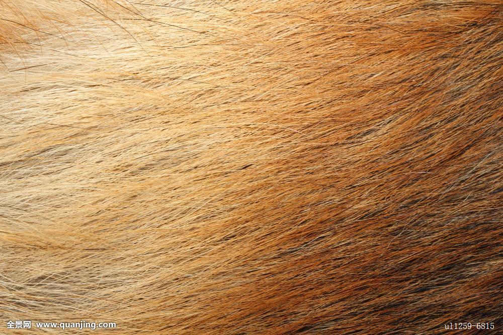 第四色播播动物与人_毛皮,皮肤,图案,特写,动物,防护,装饰,漂亮,背景,黄色,自然,质地,狐狸