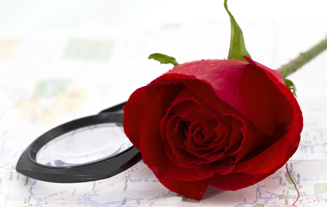 生命,玫瑰花,策划,红,规划,计划,红色,世界地图,兴奋,预备,做梦,方案图片