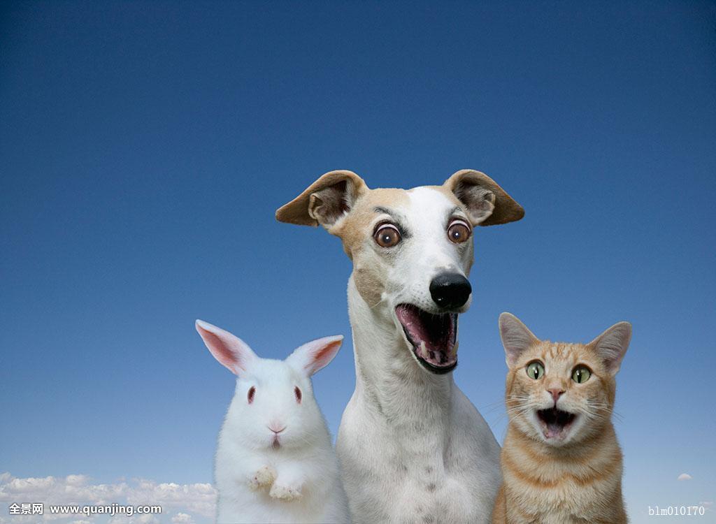 终极电脑可笑惊奇压力动物小灵紧张三只天空一起惊讶狗兔子蜘蛛侠游戏问题版图片