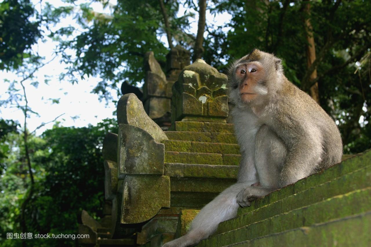 猴子为什么跟人�y.b9`�_猴子打石头人怎么设造