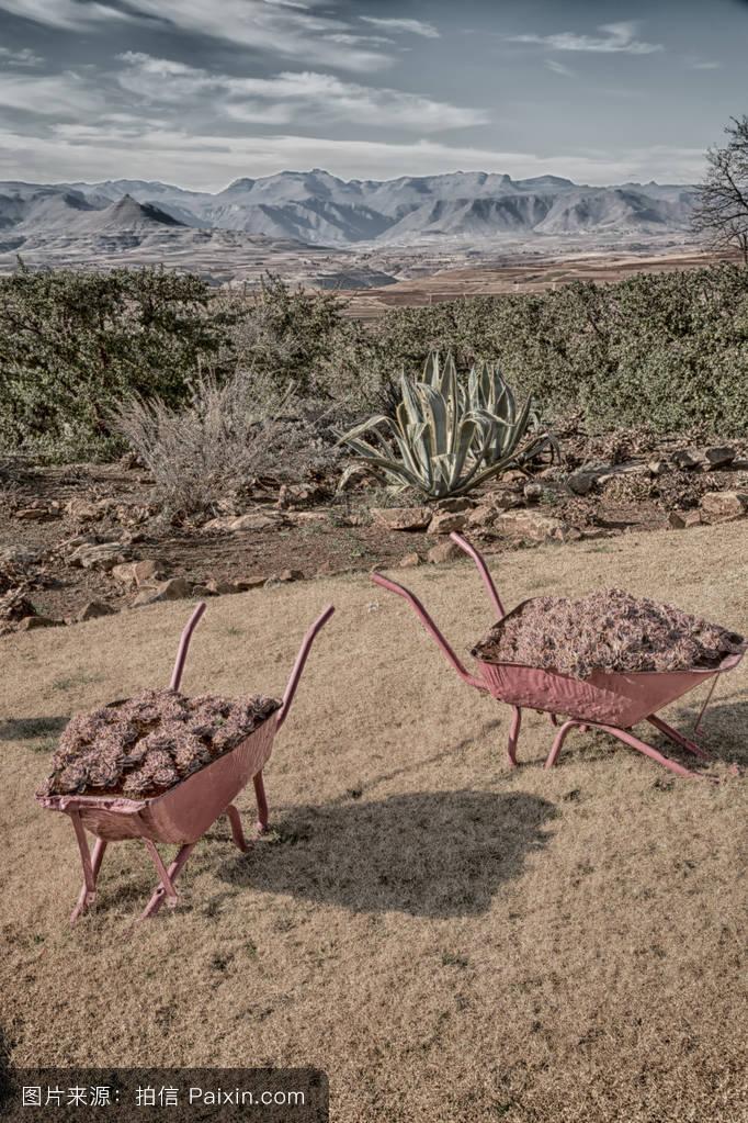 树,工具,自然的,莱索托,植物,运货马车,手推车,小山,在户外,夏天,农村图片
