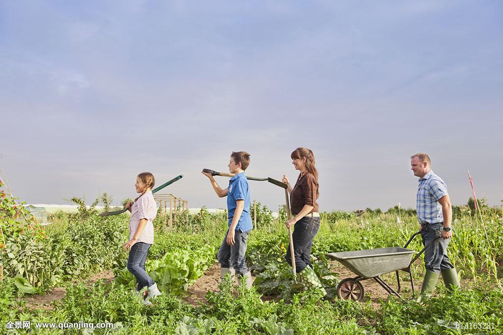白人,农民,家庭,协作,农场,地点图片